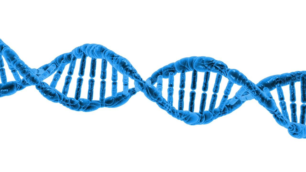 DNA Test kaufen
