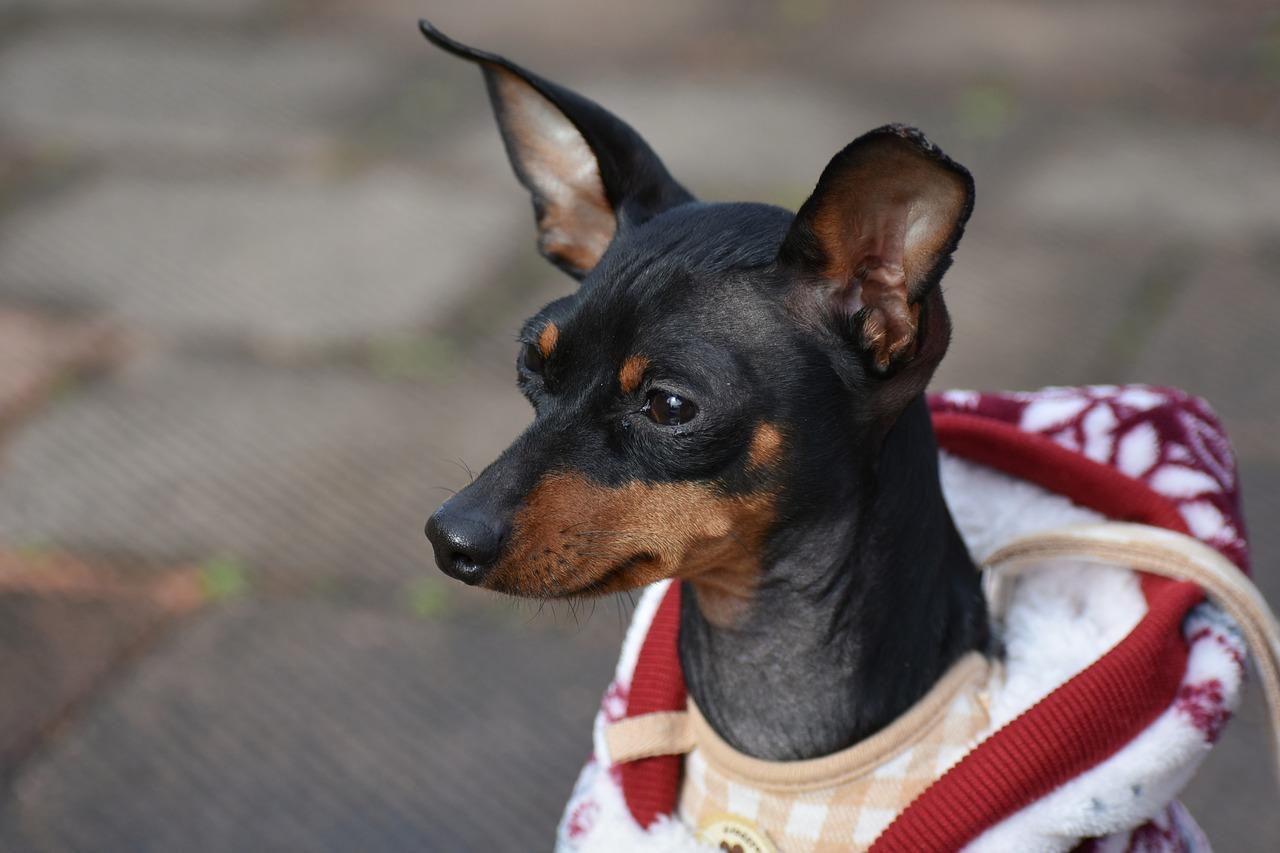 Was ist der beste Hundepullover für Hunde?